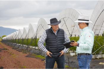 Expertisse en asesoramiento de la agricultura protegida.