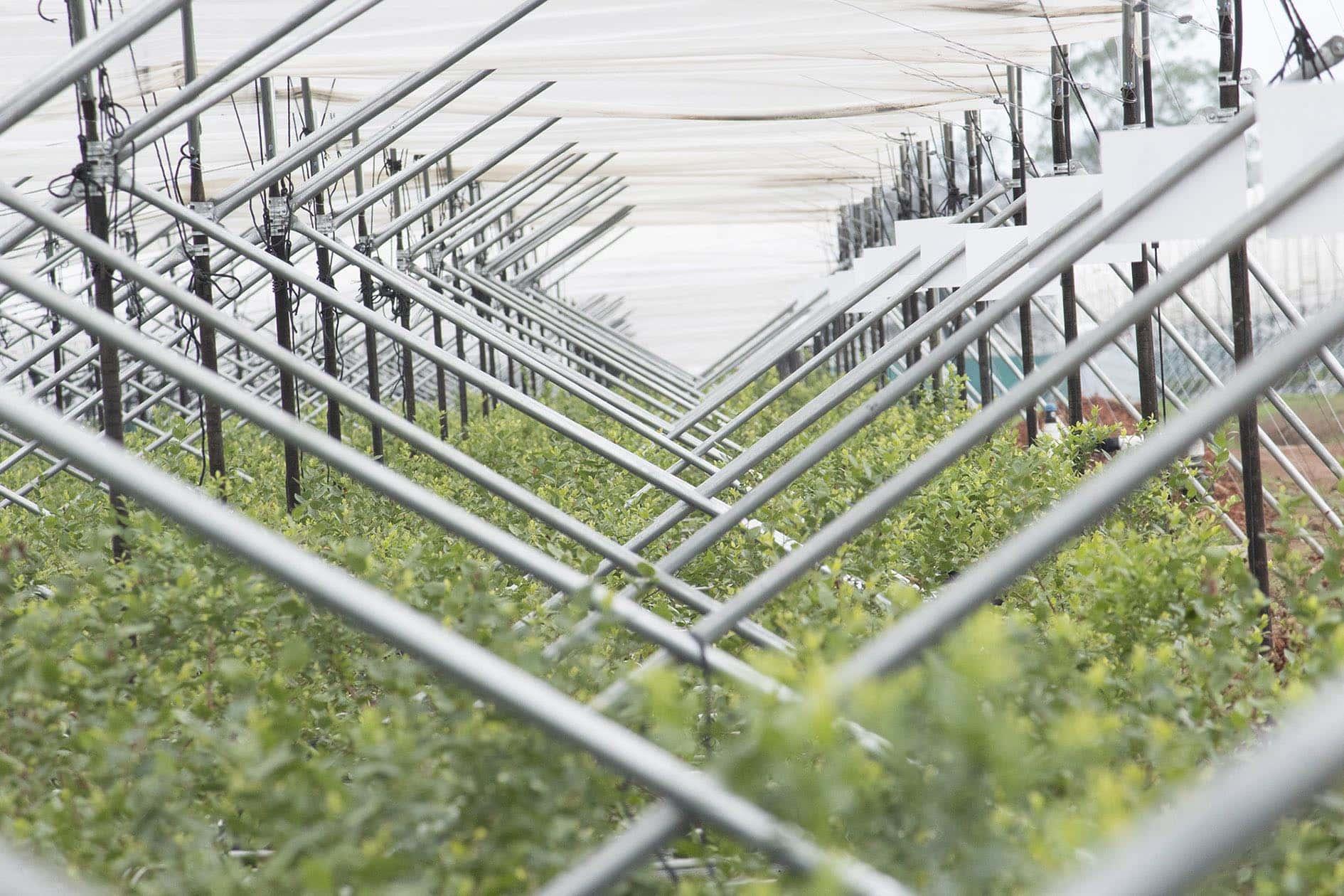 Pioneros en la industria de protección de agricultura.