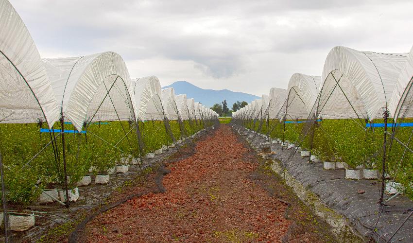 Tunnel-Tek líder del mercado gracias a la constante mejora continua en sus procesos y a la innovación agrícola.