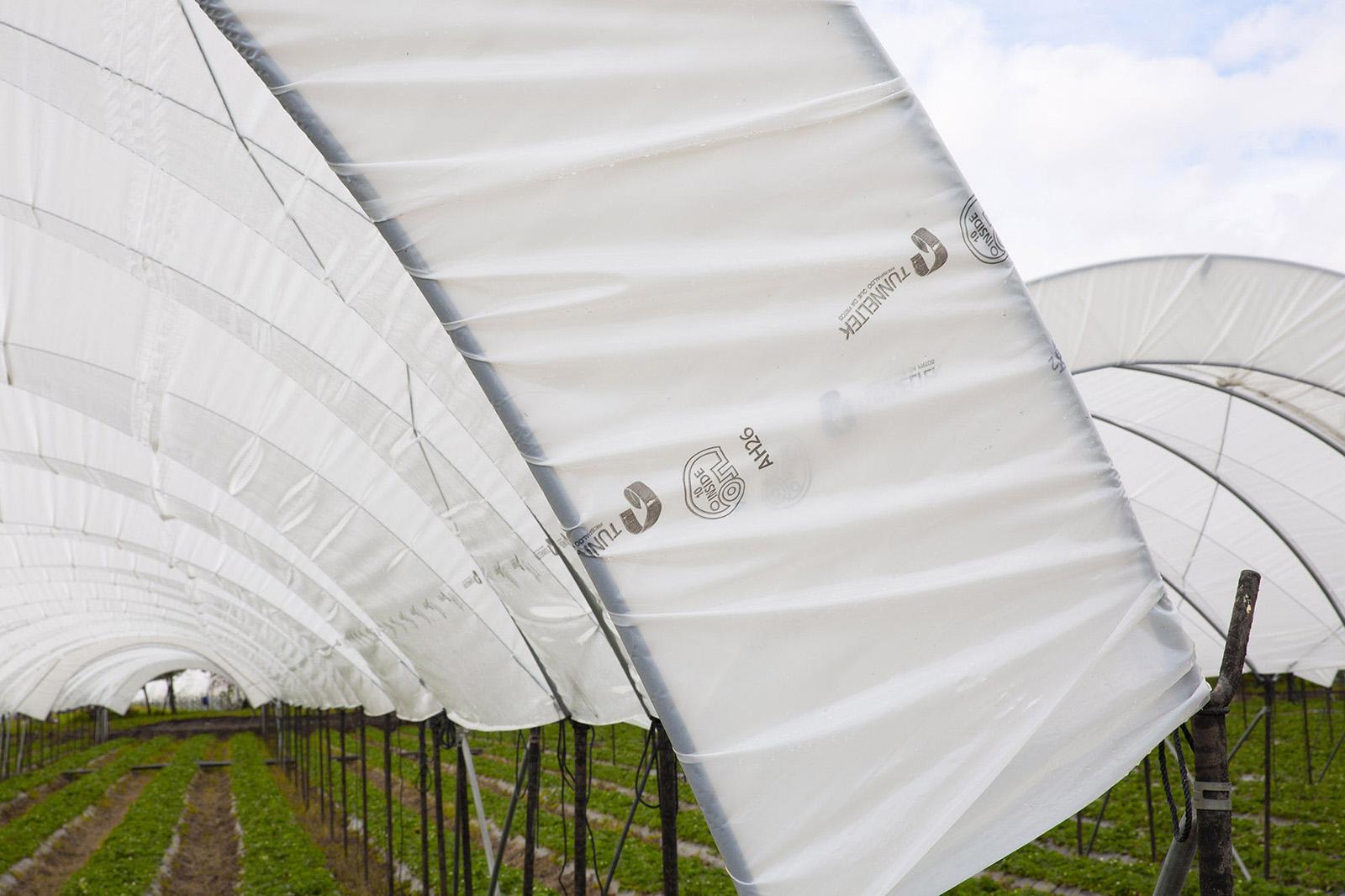 Tunneltek es proveedor exclusivo de Ginegar Plastic Products, líder mundial en desarrollo y producción de materiales de cubierta plástica para uso agrícola.